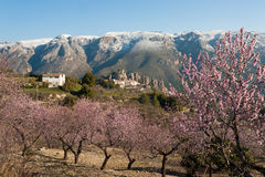 Guadalest at Almond blossom Royalty Free Stock Photography