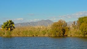 Guadalhorce river banks with reed and shrubs and mountains in the background. On a sunny day Stock Photo