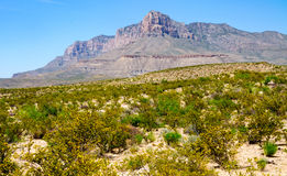 guadalupe山国家公园 免版税图库摄影