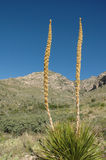 Guadalupe Mountains National P Royalty Free Stock Images