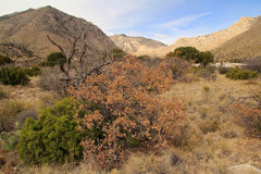 Guadalupe Mountains National Park Royalty Free Stock Images