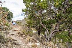 Guadalupe Mountains Texas Stock Photography