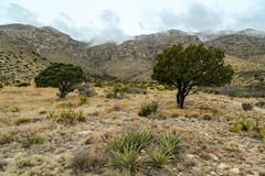 Guadalupe Mountains Texas Royalty Free Stock Photography