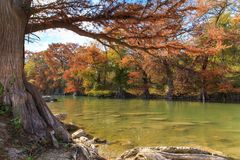 Guadalupe River State Park Fall Colors royalty free stock images