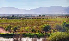 Guadalupe Valley vinland, Baja, Mexico Arkivfoto