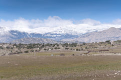 Guadarrama Mountains Stock Images