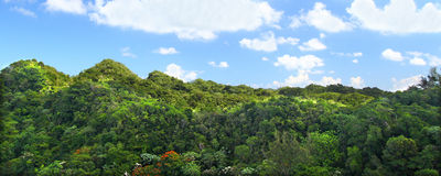 Guajataca Forest Reserve - Puerto Rico Royalty Free Stock Photo