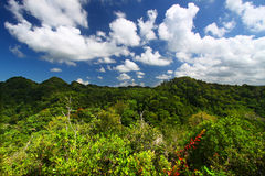 Guajataca Forest Reserve - Puerto Rico. Dense vegetation of Guajataca Forest Reserve in Puerto Rico Stock Photos