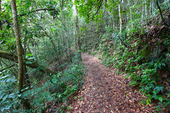 Guajataca Forest Reserve Trail Royalty Free Stock Photography
