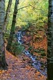Gualterio en el bosque fotografía de archivo