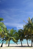 Guam background. Coconut trees in Guam USA with space alloted for text Royalty Free Stock Images