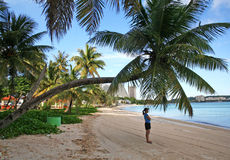 Guam Bent Coconut tree. Early morning scene of woman looking over the ocean under a bent palm tree in the pacific island of Guam Stock Image