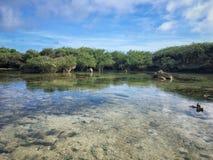 Guam ganska vatten royaltyfri bild
