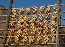 Guan Yin Xie, China: Corn Drying on Wooden Poles Royalty Free Stock Image
