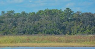 Guana River Wildlife Management Area in Florida stock images