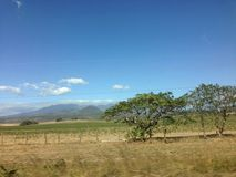 Guanacaste drzewo Zdjęcia Royalty Free