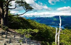 Guanaco de Cerro em Tierra del Fuego Imagens de Stock