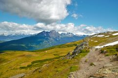 Guanaco de Cerro em Tierra del Fuego Fotos de Stock Royalty Free