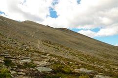 Guanaco de Cerro em Tierra del Fuego Fotografia de Stock Royalty Free