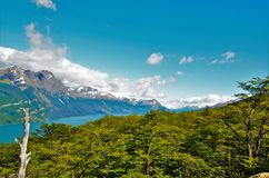 Guanaco di Cerro in Tierra del Fuego Immagini Stock Libere da Diritti