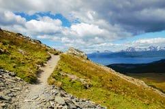 Guanaco di Cerro in Tierra del Fuego Immagine Stock