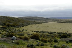 Guanaco dichtbij het dorp van Porvenir in Tierra del Fuego Stock Foto's