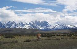 Guanaco framme av Torres del Paine NP Arkivbild
