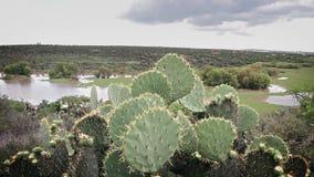 Botanical garden El charco del Ingenio, prickly pears in first plane. GUANAJUATO, MX 2016 (ILLUSTRATIVE IMAGE): Botanical garden El charco del Ingenio, prickly stock footage