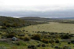 Guanako blisko wioski Porvenir w Tierra Del Fuego zdjęcia stock
