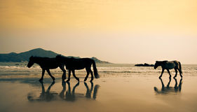Guangdong horse on the beach Stock Image