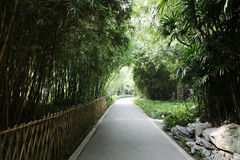 Guangdong woods road Stock Photo