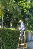 Guangdong Zhongshan, China: a worker pruning branches Stock Photography