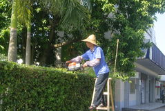 Guangdong Zhongshan, China: a worker pruning branches Stock Photo
