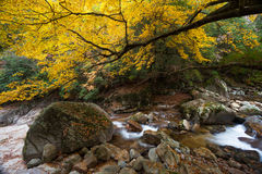 Guangwu-Berg im Herbst Stockfotos