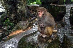 Guangxi-Provinz China, berühmte Touristenattraktionen in Hezhou, guposhan Lizenzfreie Stockfotos