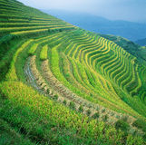 Guangxi Xing Pingan Terrace Fields Royalty Free Stock Photos