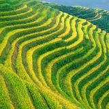 Guangxi Xing Pingan Terrace Fields Stock Image