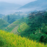 Guangxi Xing Pingan Terrace Fields Royalty Free Stock Photo