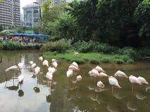 Guangzhou Stock Photography