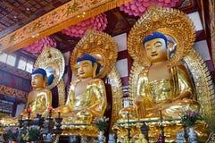 Guangzhou - Tempel van de Zes Banyan-Bomen royalty-vrije stock fotografie