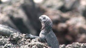 Guano na skalistym wybrzeżu Galapagos wyspy zdjęcie wideo
