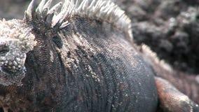 Guano na skalistym wybrzeżu Galapagos wyspy zbiory