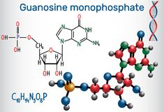 Guanosine monophosphate GMP molecule, it is an ester of phosph Stock Images