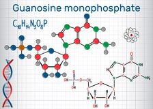 Guanosine monophosphate GMP molecule, monomer in RNA . Structu. Ral chemical formula and molecule model. Sheet of paper in a cage. Vector illustration Stock Image