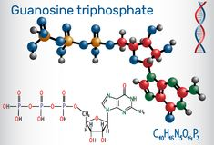 Guanosine triphosphate GTP molecule, it is used Stock Image