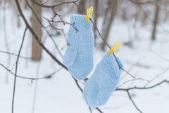 Guantes azules en pinzas Fotos de archivo