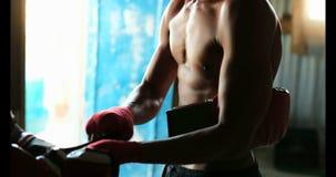 Guantes de boxeo del boxeador que llevan de sexo masculino afroamericano en el estudio 4k de la aptitud metrajes