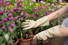 Guantes de goma de limpieza del uso del jardín del guante del lavaplatos de goma de la cocina del hogar fotos de archivo