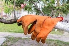 Guantes de la naranja del jardín Imagenes de archivo