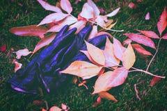 Guantes en las hojas en el parque Estación de Autum Foto de archivo libre de regalías